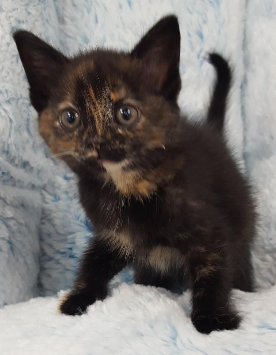 <small><del>Domestic kitten</del></small><br />Happy Domestic kitten