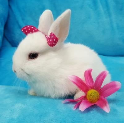 Bunnies For Sale Near Me >> Small Animals For Sale Your Pet Store In Newmarket