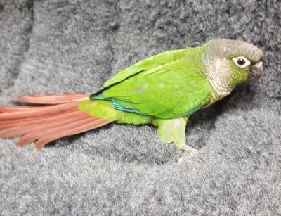 Birds for Sale - Your pet store in Newmarket