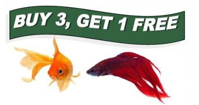 Bettas your pet store in newmarket for Your fish store