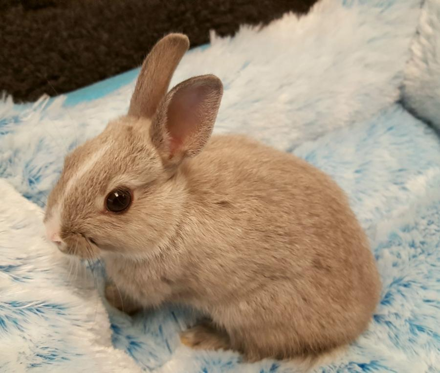<small><del>Dwarf Rabbit</del></small><br />Happy Dwarf Rabbit