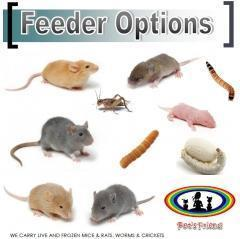 FEEDER INSECTS & RODENTS